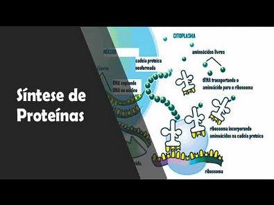 síntese proteica - como as células produzem proteínas