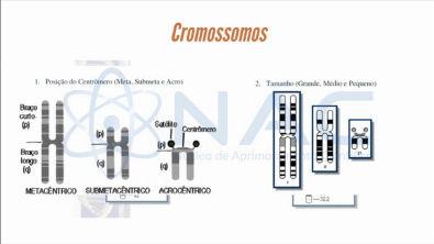 Módulo 2 - Cromossomos - Curso de Citogenética Humana - NAC