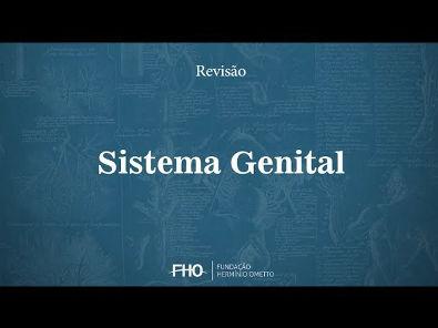 Sistema Genital - Anatomia Humana