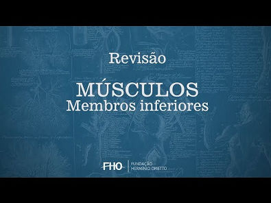 Músculos - Membros Inferiores - Anatomia Humana