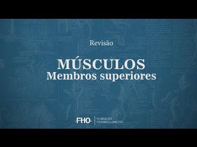 Músculos - Membros Superiores - Anatomia Humana