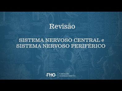 Sistema Nervoso Central e Periférico - Anatomia Humana