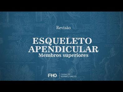 Esqueleto Apendicular - Membro superior - Anatomia Humana