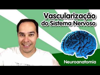 [Neuroanatomia] 11 - Vascularização do Sistema Nervoso