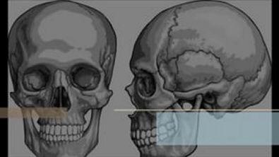 vídeo aula ossos do crânio