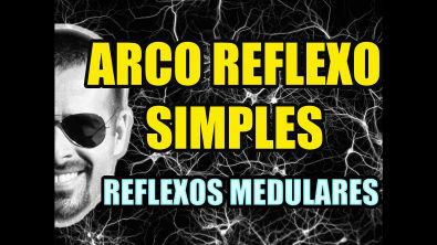 Vídeo Aula 131 - Sistema Nervoso/Neuroanatomia - Arco Reflexo: Reflexo de Estiramento e de Retirada