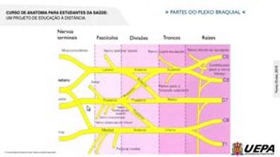 03 3 - Nervos Espinhais - Plexo Cervicobraquial