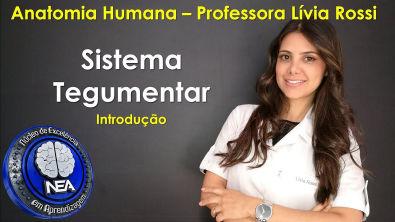 Anatomia Huamana - Sistema Tegumentar - Lívia Rossi