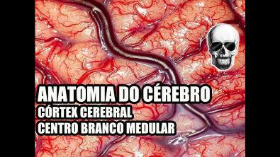 Vídeo Aula 134 - Sistema Nervoso/Neuroanatomia: Anatomia do Cérebro (Córtex Cerebral) - Telencéfalo