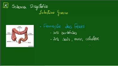 Sistema Digestório - Intestino Grosso