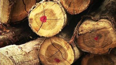 Silvicultura e indústria florestal para uma Economia Verde