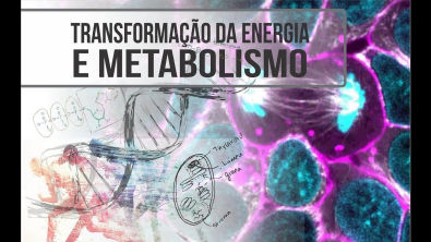 Metabolismo Energético a base para tudo!