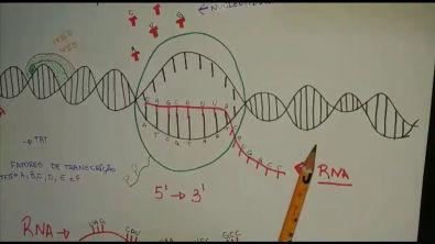 TRANSCRIÇÃO RNA