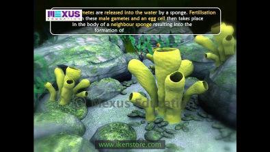 #IkenApp Learn Biology: Kingdom Animalia: Phylum Porifera   iKenEdu