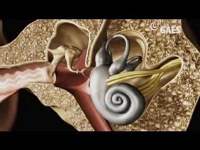 viagem ao ouvido