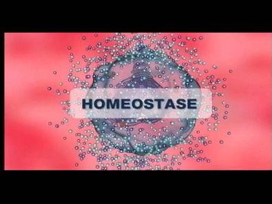 Corpo Virtual - Homeostase