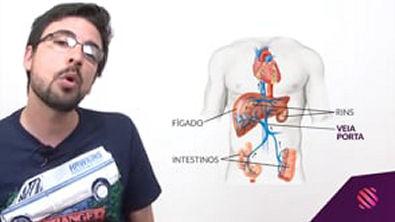 Principais doenças causadas por vermes - Mundo Biologia - ENEM