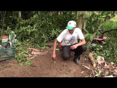 Agroflorestar, -Implementação manual e semimecanizada de canteiro agroflorestal