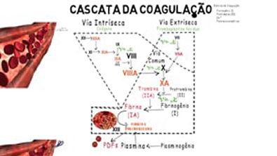 hemostasia final