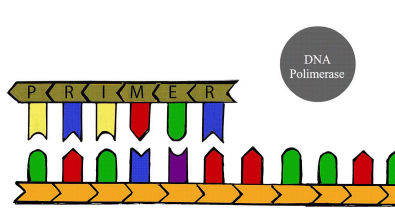 Sequenciamento de Sanger - PPCC Biologia Molecular UFSC