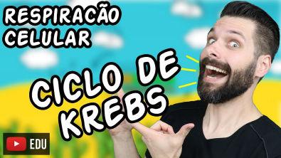 Respiração Celular (Parte 2) - Ciclo de Krebs   Biologia com Samuel Cunha