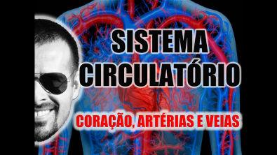 Sistema Circulatório - O coração, as artérias e as veias - Anatomia Humana - VideoAula 003