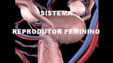 11 SISTEMA REPRODUTOR FEMININO APRESENTAÇÃO