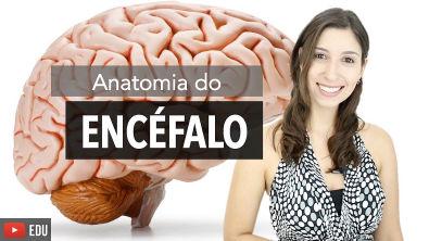 Sistema Nervoso 2/6: Anatomia do Encéfalo e Estruturas de Proteção   Anatomia e etc