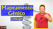 Mapeamento Gênico - Linkage ou Genes Ligados - Genética
