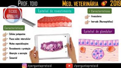 Histologia Animal: Tecido Epitelial | Med. Veterinária | Prof. Toid