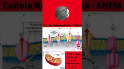 Biologia Enem Cadeia Respiratória