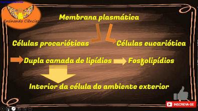 Vídeo 13 - A membrana plasmática funciona como um cercadinho!!!