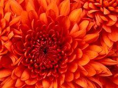 flor de liz :)