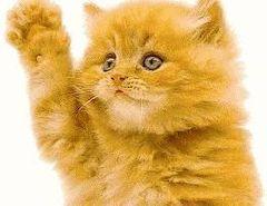 gatinha mamhosa Tiengo