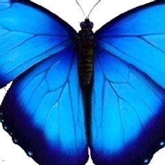 luz blue
